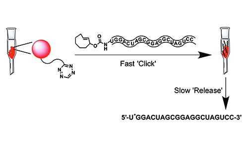 pubs_RNA click-rel_500x300